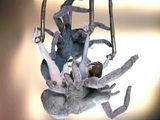 3d animated girl caught and hard drilled by tarantula monster